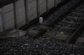 2009年7月5日、西武球場前、線路を歩く猫。