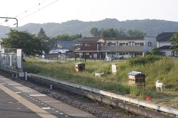 2010年6月3日、元加治、駅南側の草地のヤギ2頭。