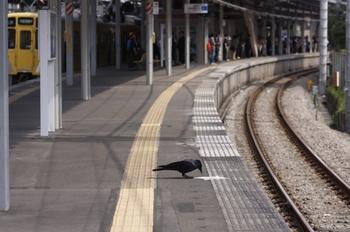 2011年4月16日、萩山、考えるカラス