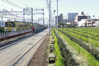 2013年10月27日、西所沢駅近くの再生中(?)のお茶畑と2089Fの2146レ。
