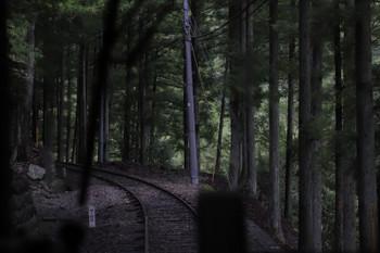 2018年9月9日9時49分ころ、奥泉~アプトいちしろ、そして大井川沿いの森の中を進みます。