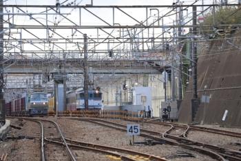 2019年1月26日 13時18分ころ、新秋津、発車を待つ1253Fの甲種鉄道車両輸送列車と西武263Fの横を通過するEF66-100牽引のコンテナ貨物列車。
