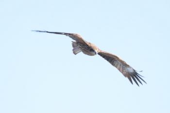 2019年12月31日 13時46分ころ。久里浜ゆきフェリーに近づいてきた鳥。