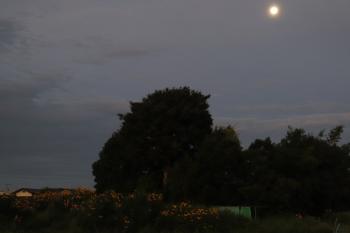 2020年9月4日。元加治。ホームから見えた南の空のお月様。