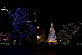 2020年12月10日 19時半ころ。高知市内の中央公園。