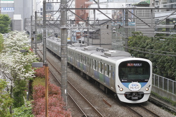 2016年4月23日、高田馬場~下落合、38115Fの臨時急行 西武秩父ゆき。