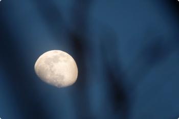 2021年2月23日 17時27分頃。元加治駅近く。木の枝よりも手前に写った月。