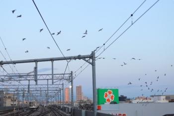 2021年3月15日 5時57分頃。石神井公園。6番線で夜間滞泊だった東急5121Fと、駅を周回する鳩の群れ。