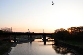 2021年4月11日 5時28分頃。仏子〜元加治駅間。入間川の上流方向へ向かうカモ。